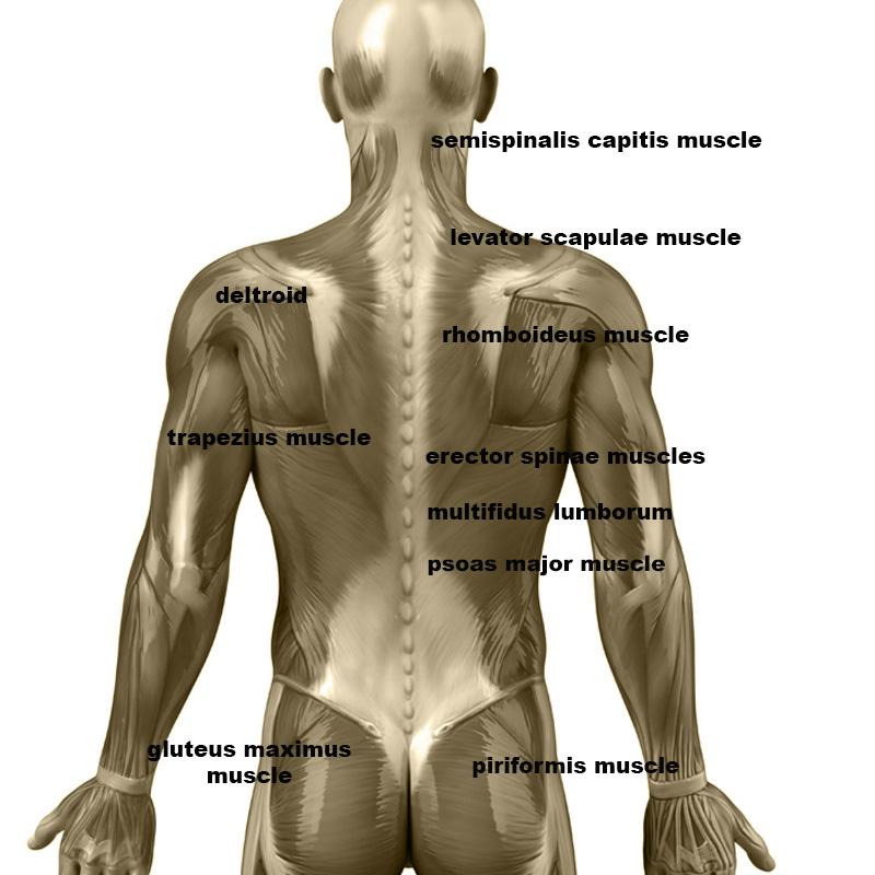 Upper Shoulder Massage- Roller Extension